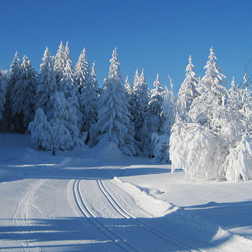 fondo sci